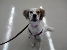 愛護センター 譲渡犬