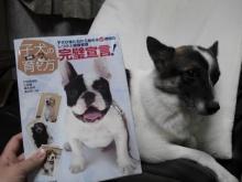 子犬の育て方完璧宣言 犬の本