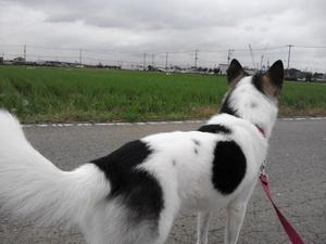 犬の散歩 しつけ