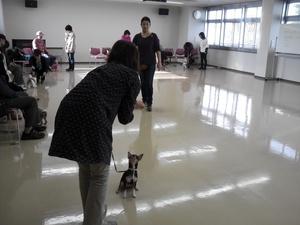 犬のしつけ教室 愛護センター