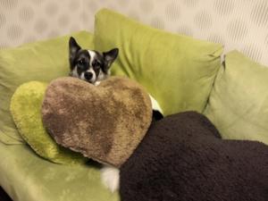 犬のベッド 寝床