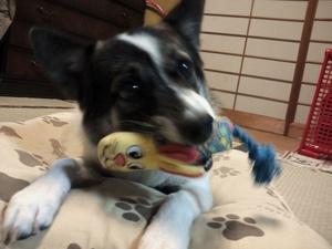 犬のオモチャ 犬用おもちゃ