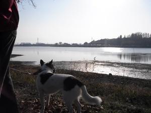 犬の散歩 引っ張り 飛びつき