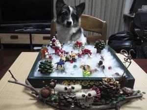 犬連れイベント