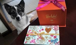 バレンタイン 犬 チョコレート