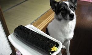 恵方巻き 犬