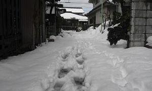 大雪の散歩