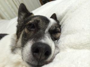 愛犬 ベッド 寝床