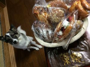 看板犬 パン屋さん 川越 埼玉