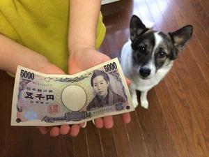 子供と犬 イヌ お金どれ位かかる?