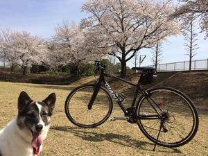 自転車 追いかける犬