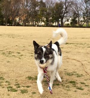 ロングリード 公園 伸縮リードで遊ぶ犬