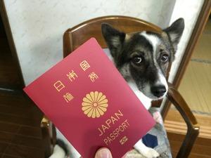 海外旅行 パスポート 犬留守番