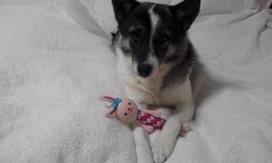 犬のおもちゃ 犬と遊ぶ