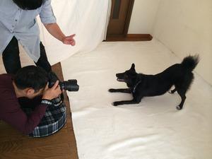 中型犬 MIX 犬に芸を教える