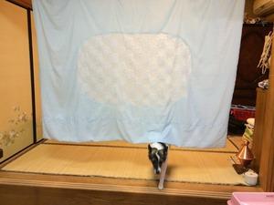 犬 シャンプー 自宅で洗う