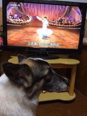犬 埼玉 川越 しつけ