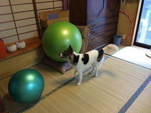 雨の日の屋内遊び 犬