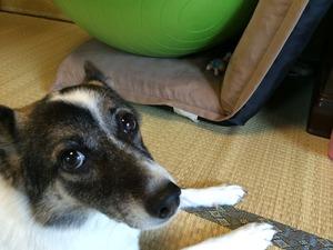 屋内で犬とゲーム