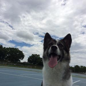 公園 犬の散歩 埼玉県