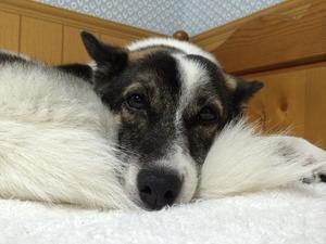 犬のベッド 犬と寝る