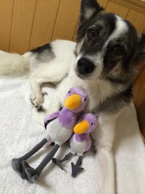 犬のオモチャ 遊び方