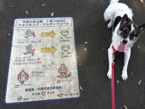 公園 犬の散歩 リード
