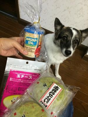 犬 ハワイ 土産 犬チーズ