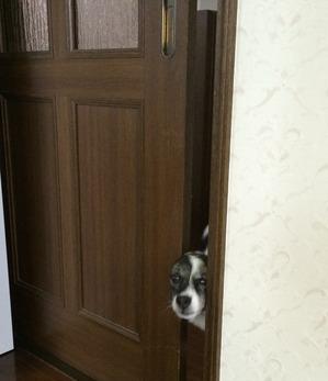 屋内飼い 犬のしつけ
