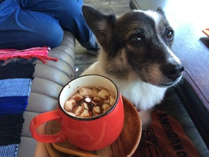 カフェ 犬と入れる 入間