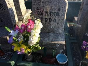 愛犬のお墓 ペットロス
