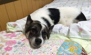 子犬の躾 東松山 鳩山