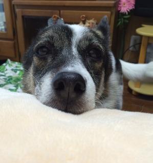 愛犬の癒し 犬との暮らし
