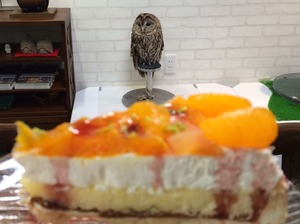 鳥カフェ ケーキ カレー