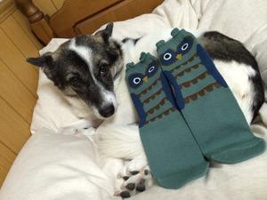 クリスマスプレゼント 犬
