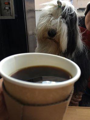 ビアデットコリー カフェテラス犬