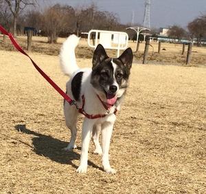犬とお出かけ 公園 ロングリード