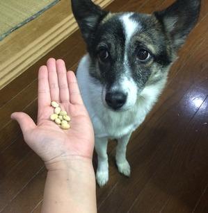 節分 犬と豆まき