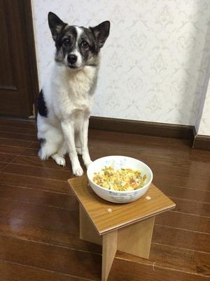 フードテーブル 愛犬 食事