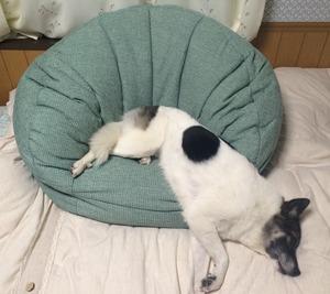 犬用 ソファ 犬グッズ 埼玉