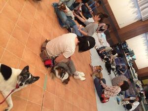 犬マッサージ 犬セミナー