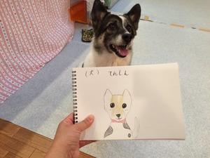 犬の正しいしつけ方 埼玉