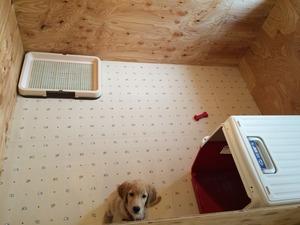 大型犬のハウス 庭付き一戸建て