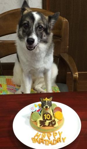 犬の誕生日 お祝い