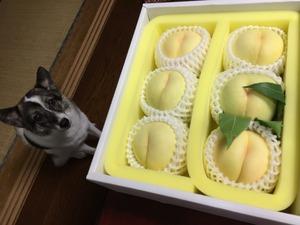 岡山県 桃 犬の躾