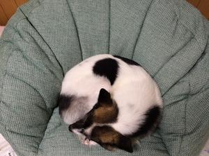 ワンモナイト 犬の寝姿