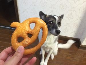 犬 しつけ 東松山