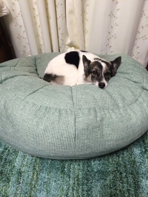 犬の寝床 犬と一緒に寝る