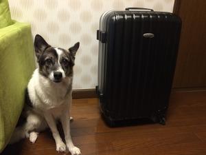 スーツケース 旅の準備 犬