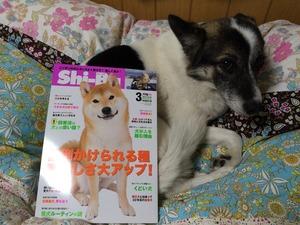 シーバ 犬雑誌 監修トレーナー